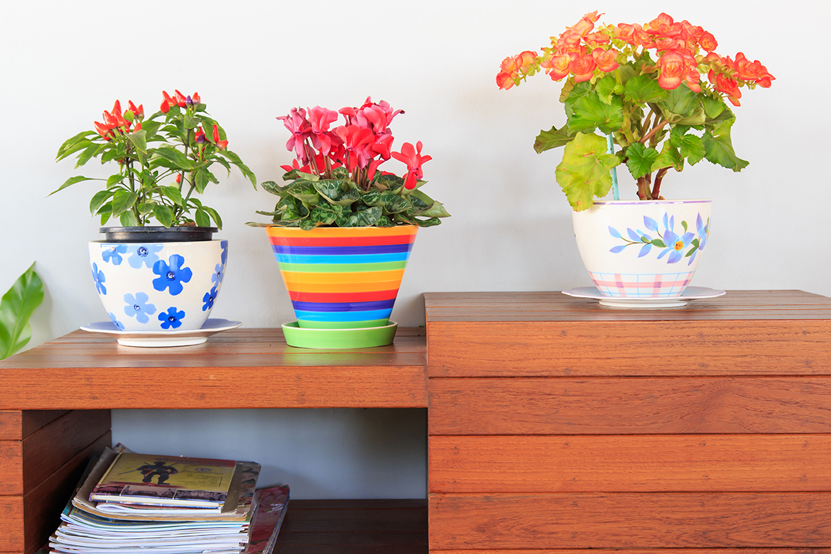 10 houseplants you can keep in your home to improve air quality bio home by lam soon - Plants can improve ambience home ...