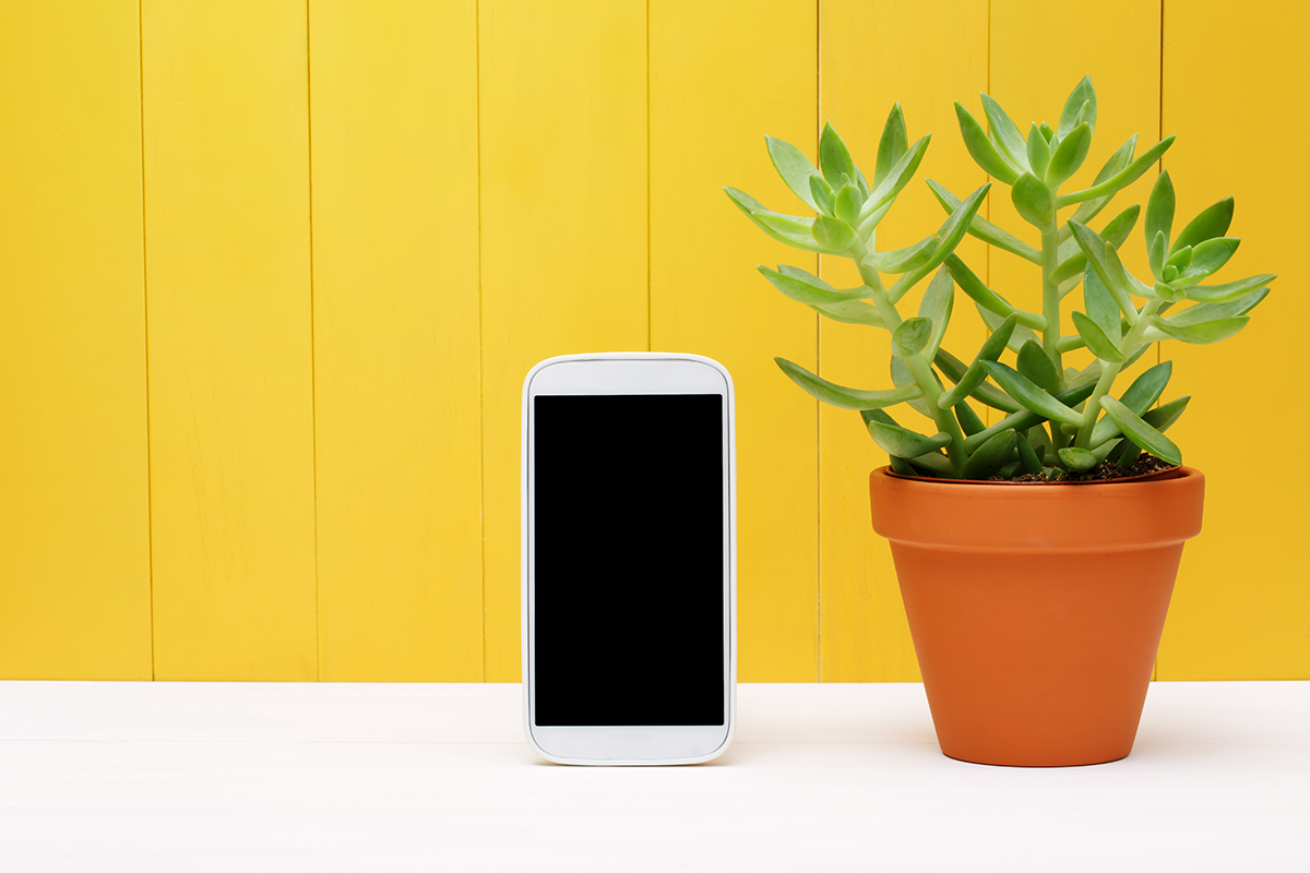 BioHomeCares - Charge your phone with a plant