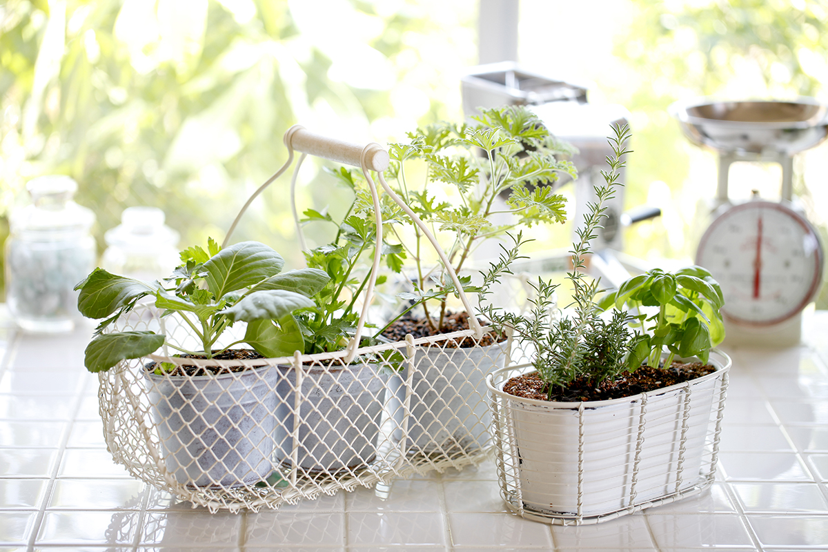smart gardening growing plants at home with minimal. Black Bedroom Furniture Sets. Home Design Ideas