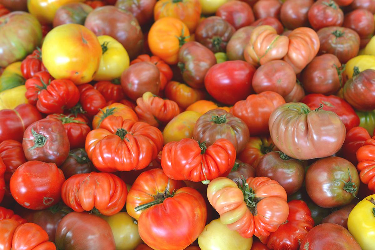 BioHomeCares - Florida ugly vegetable farm