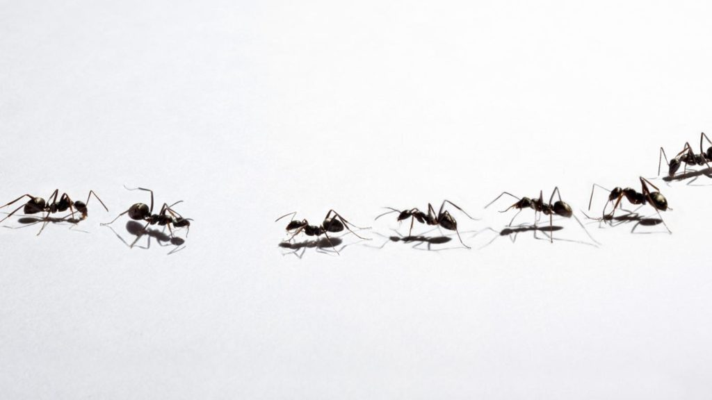 rid-small-ants_a19cfe89041a3f03